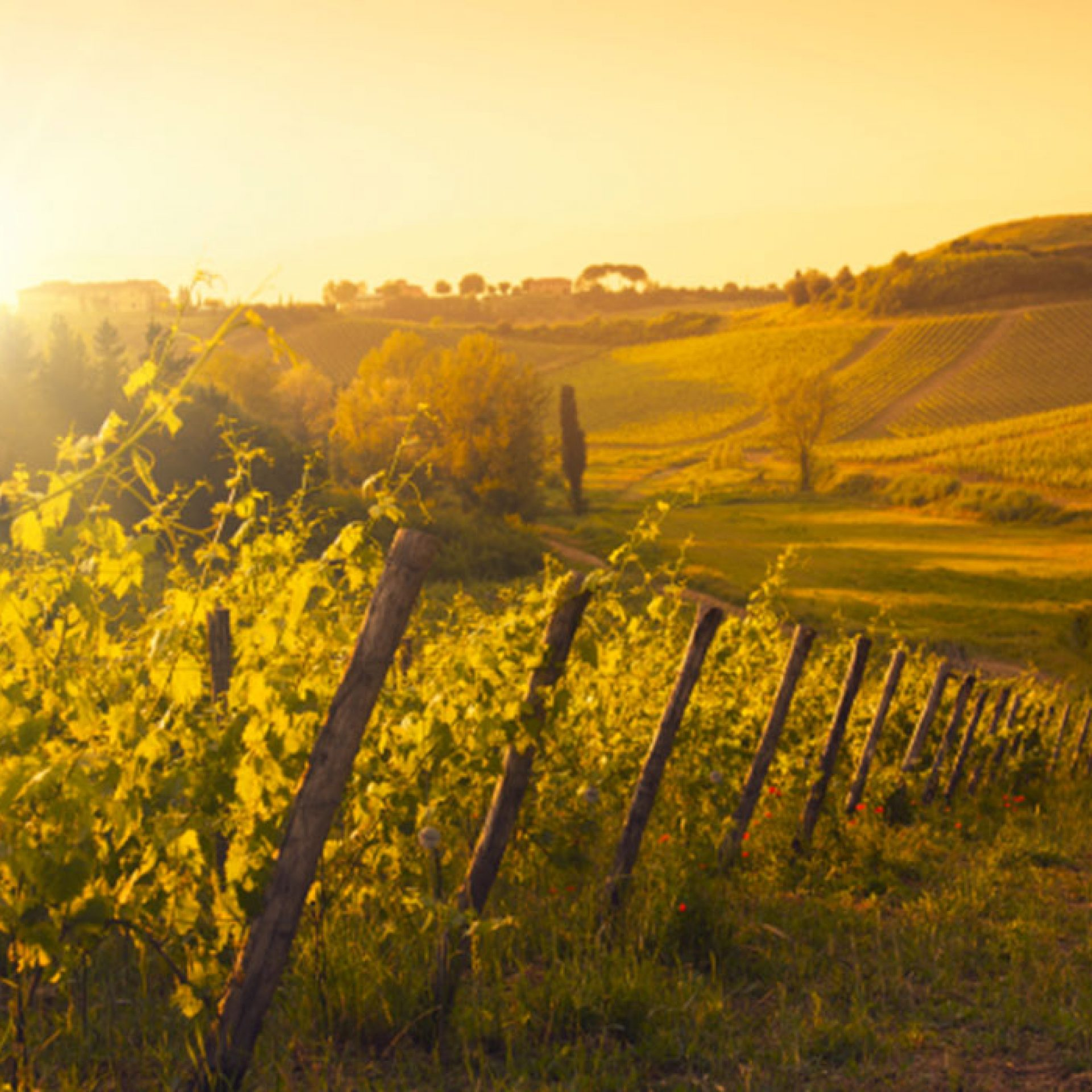 Central California Sunkissed Wine Country